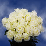 50 White Mother's Day Roses