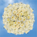 200 Stems of White with Light Creamy, Anastacia Roses