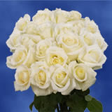 50 White Valentine's Day Roses                                                              For Delivery to New_Jersey