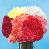 350 Stems of Assorted Color Carnations