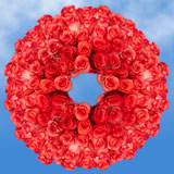 250 Stems of Bright Coral, High & Blooming Roses