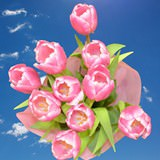 200 Stems of Pink and White Bicolor Tulips                                                              For Delivery to New_Hampshire
