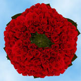 250 250 Red Roses
