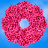 250 Stems of Bright Hot Pink Roses