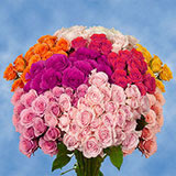 200 Stems of Assorted Color Spray Roses 700 Blooms                                                              For Delivery to Vermont