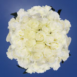 200 Stems of White, Polar Star Roses                                                              For Delivery to Alabama