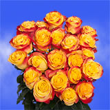 50 Stems of Bright Bicolor Yellow Orange Roses