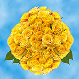 100 Stems of Yellow Roses