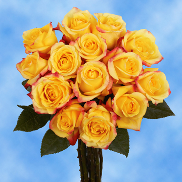 Bright Yellow with Red Tips Roses Choose Your Quantity From 50 to 250 Tressor 2000 Roses                                                              For Delivery to California