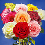 50 Stems of Your Choice of up to 2 Colors Roses