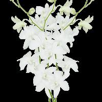 Flower Delivery to Exton, Pennsylvania