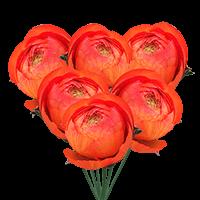 100 Orange Ranunculus For Delivery to Nebraska, Local.Globalrose.Com