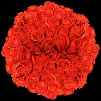200 Stems of Coral Orange, Kamila Roses For Delivery to Lebanon, Missouri
