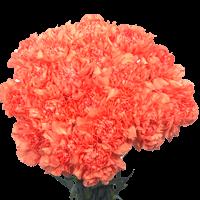 200 Stems of Orange Carnations For Delivery to Denver, Colorado
