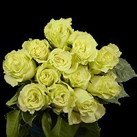 1 Dozen Green Roses For Delivery to Pullman, Washington