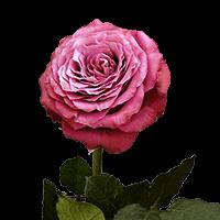 Precious Moments Garden Roses For Delivery to Burlington, Iowa