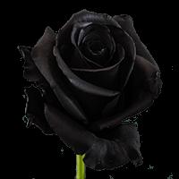 Black Roses For Delivery to Williston, North_Dakota