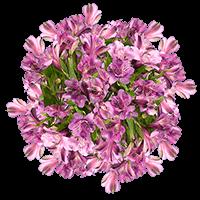 Lavender Alstroemerias  For Delivery to Philadelphia, Pennsylvania