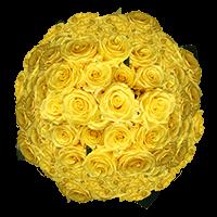 200 Stems of Light Yellow Ochre, Sonrisa Roses For Delivery to Jacksonville, Arkansas
