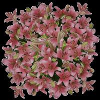 Flower Delivery to North_Dakota, Local.Globalrose.Com