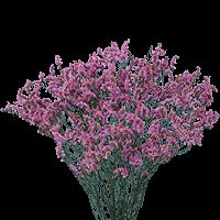 Purple Limonium  For Delivery to North_Dakota, Local.Globalrose.Com