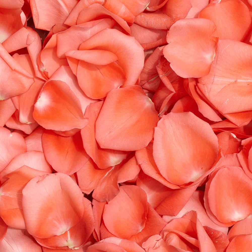 Vibrant Orange Rose Petals | GlobalRose