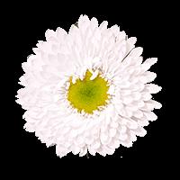Flower Delivery to Ogden, Utah