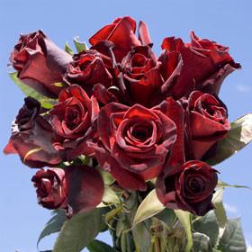 Baccara Black Roses Globalrose