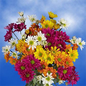 144 Blooms Assorted