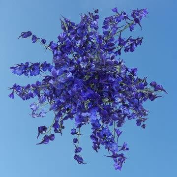 Beautiful Blue Volken Delphinium Flowers