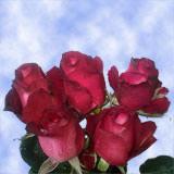 50 Corrida Roses                                                              For Delivery to Nebraska