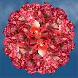 Bulk Deep Pink and Cream Roses