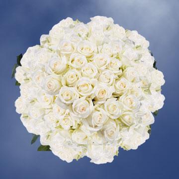 Bulk off white roses a creamy yellow center for sale globalrose bulk off white roses with a creamy yellow center for sale mightylinksfo