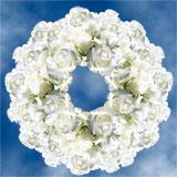 250 Stems of Pure White, Akito Roses                                                              For Delivery to Hillsboro, Oregon