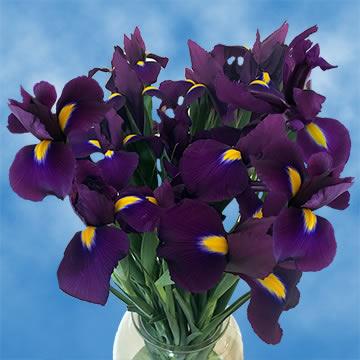 Wedding Flowers Online.Bulk Purple Iris Wedding Flowers Online
