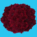 200 Stems of Burgundy Zurigo Carnations                                                              For Delivery to Pennsylvania