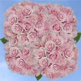 150 X Long Stems of Light Pink Cream Mondial Roses                                                              For Delivery to Nebraska