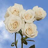 Cheap White Spray Roses