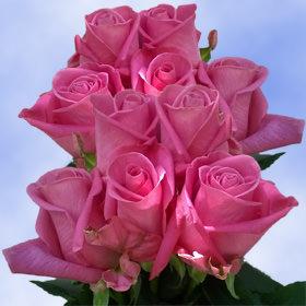 Deep purple roses dark purple flower blooms deal globalrose deep purple roses dark purple flower blooms wholesale deal mightylinksfo