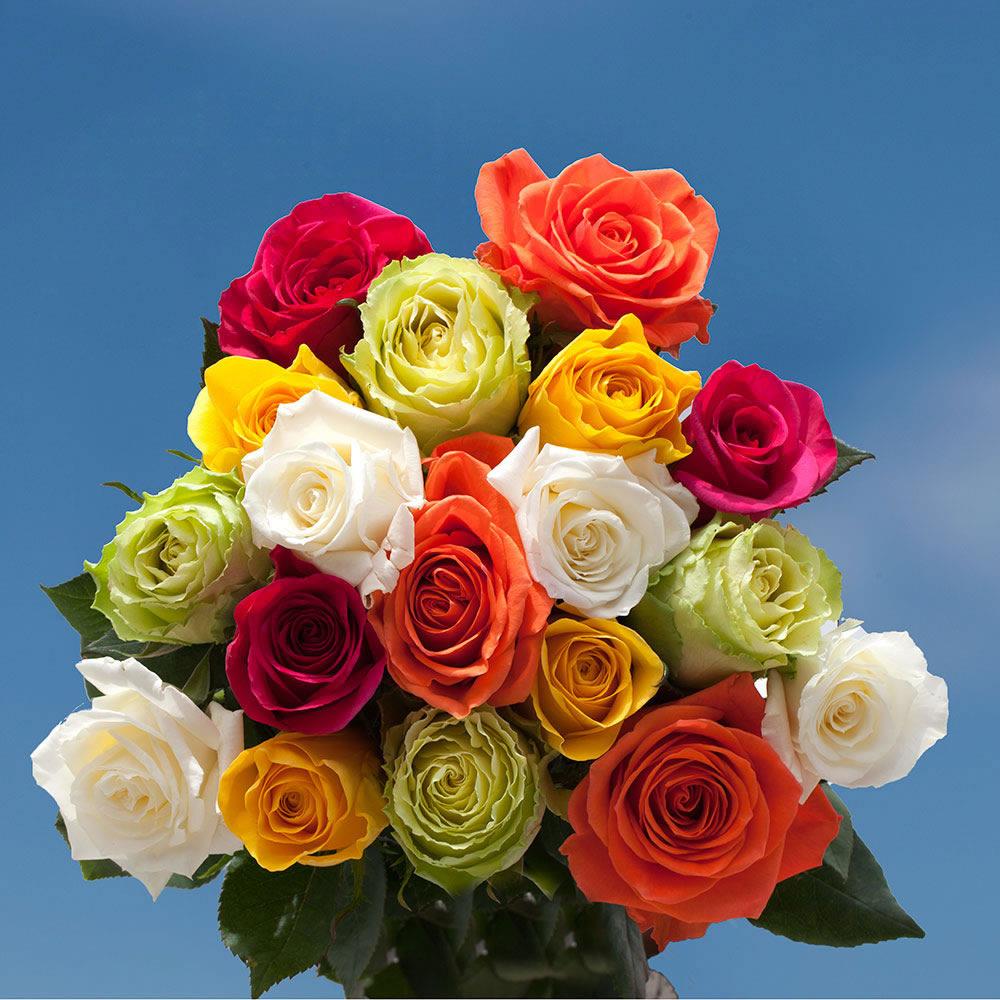 Hvilken Farve Roser Til Fødselsdagen