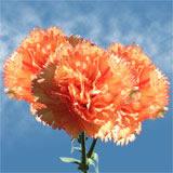 Flower Delivery to Beaverton, Oregon
