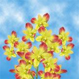 Gun Pong Orchids
