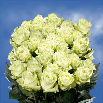 Light Green Roses Gorgeous Light Green B...