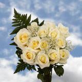 Dozen Roses Ivory