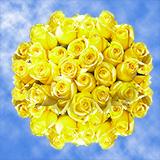 Lemon Yellow Roses For Sale