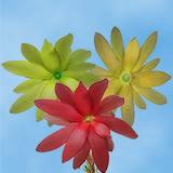 Leuca Proteas Asst