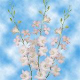 Peach Dendrobium Orchids