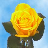 Valentine's Day Yellow Roses