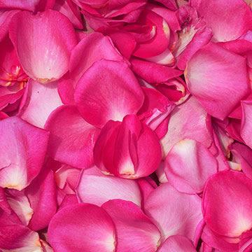 Vibrant hot pink rose petals globalrose vibrant hot pink rose petals mightylinksfo