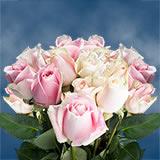 50 Stems of Soft Pink, Rosita Vendela Roses                                                              For Delivery to Hillsboro, Oregon